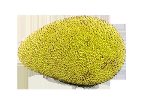 Online Jack Fruit