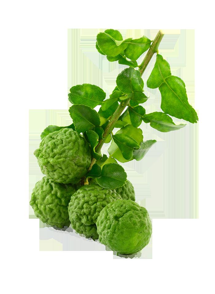 Buy Lime Leaves