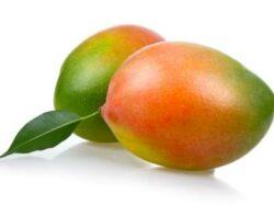 Keitt_Mango